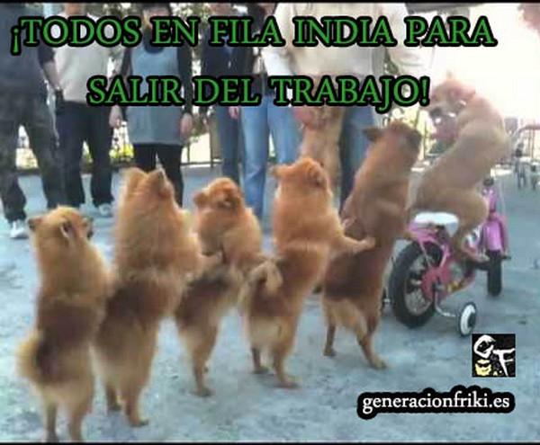 263) 28-03-14 fila-india-salir-trabajo-Humor
